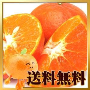 愛媛産 高級果実 アンコールオレンジ 4kg【送料無料】訳あり fruit-sunny