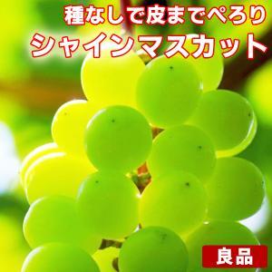 シャインマスカット 良品 約1kg〜1.2kg (目安1〜4房) ご家庭用 送料無料 フルーツ 葡萄 皮ごと食べれる 種なしぶどう 果物 くだもの 青果 食品 ふぞろい 果実|fruit-sunny