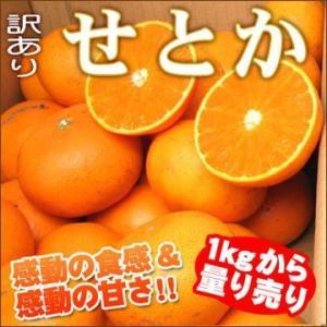 愛媛産訳ありせとか1kgからの量り売り|fruit-sunny
