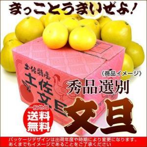 土佐文旦 秀品10kg3L 送料無料 16〜18玉|fruit-sunny