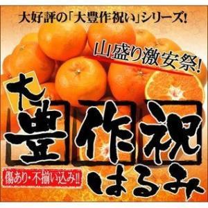 大豊作祝いはるみ 5kg 送料無料 不ぞろい 訳あり【2月中旬発送予定】フルーツ 果物 くだもの 柑橘類 ミカン fruit-sunny