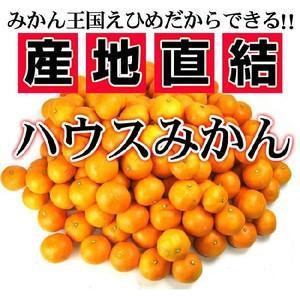 絶品!夏こそハウスみかん愛媛産 訳ありハウスみかん1kg量り売り フルーツ 果物 くだもの わけあり 食品 ワケあり ご家庭用 みかん 柑橘類 ミカン|fruit-sunny