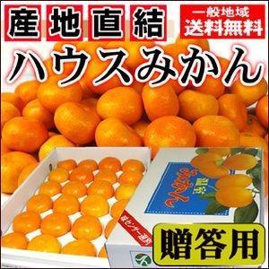 夏こそみかんを贈ろう!愛媛産 贈答用ハウスみかんMサイズ【送料無料】約2.5kg|fruit-sunny