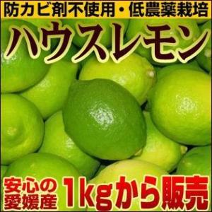 愛媛産 ハウスレモン1kg(傷あり・不揃い)国産レモン【送料無料】|fruit-sunny
