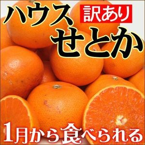 愛媛産ハウスせとか2kg(訳あり)送料無料 フルーツ 果物 くだもの わけあり 食品 ワケあり ご家庭用 産地直送 みかん 柑橘類 ミカン 産地直送|fruit-sunny
