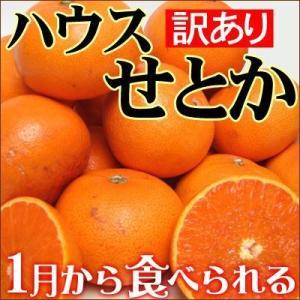 愛媛産ハウスせとか5kg(訳あり)送料無料 フルーツ 果物 くだもの わけあり 食品 ワケあり ご家庭用 産地直送 みかん 柑橘類 ミカン 産地直送|fruit-sunny