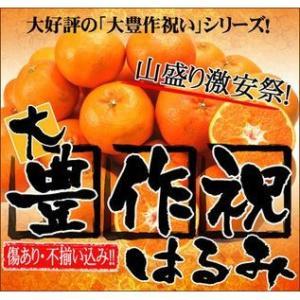 大豊作祝いはるみ 2kg 送料無料 不ぞろい 訳あり【2月中旬発送予定】フルーツ 果物 くだもの 柑橘類 ミカン fruit-sunny