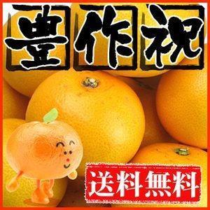 大豊作祝いはっさく 10kg 送料無料 2セット御購入でお得な500円OFFクーポン!フルーツ 果物 くだもの 柑橘類 ミカン|fruit-sunny