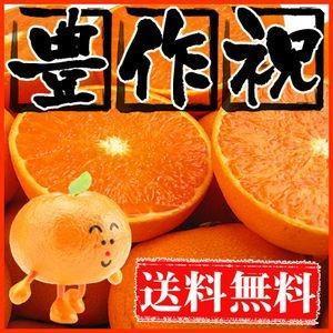 大豊作祝い せとか 10kg 送料無料 愛媛県産 フルーツ 果物 くだもの おやつ みかん 柑橘類 ミカン 産地直送|fruit-sunny
