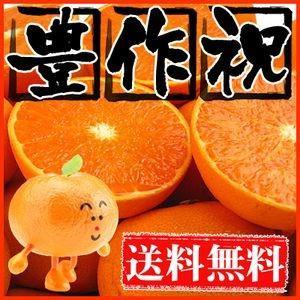 大豊作祝い せとか 2kg 送料無料 愛媛県産 フルーツ 果物 くだもの おやつ みかん 柑橘類 ミカン 産地直送|fruit-sunny