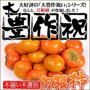 さらにお得!大豊作祝いの刀根柿 5kg 送料無料|fruit-sunny