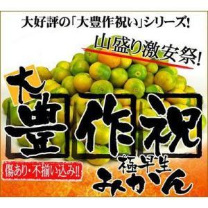 最安値に挑戦!極早生大豊作祝いみかん20kg 送料無料 訳あり 愛媛県産 フルーツ 果物 旬 くだもの わけあり 食品 ワケあり ご家庭用 柑橘類 ミカン 産地直送 fruit-sunny