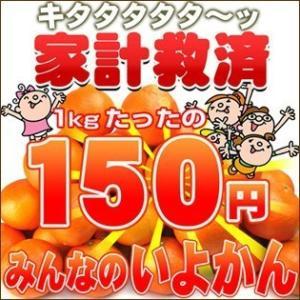家計救済みんなの150円いよかん(訳あり・不選別・不揃い)1kg150円で20kgまでお好きなだけどうぞ♪|fruit-sunny