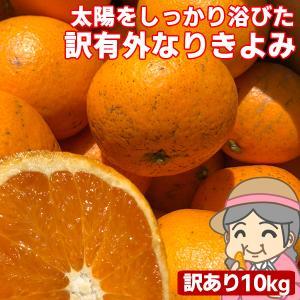 愛媛産 ご家庭用 農家さんもぐもぐ 外なり訳ありきよみ 10kg(+約0.5kg多め) 清見オレンジ 清見タンゴール 不揃い 傷 汚れ有 フルーツ 果物 くだもの みかん|fruit-sunny