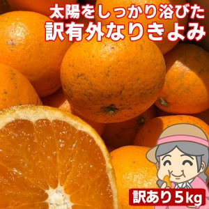 愛媛産 ご家庭用 農家さんもぐもぐ 外なり訳ありきよみ 5kg(+約0.5kg多め) 清見オレンジ 清見タンゴール 不揃い 傷 汚れ有 フルーツ 果物 くだもの みかん|fruit-sunny