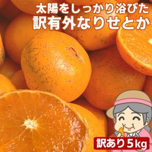 愛媛産 ご家庭用 農家さんもぐもぐ 外なり訳ありせとか 5kg(+約0.5kg多め) 不揃い 傷 汚れ有 フルーツ 果物 くだもの みかん 柑橘類|fruit-sunny