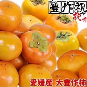 愛媛産 大豊作訳あり柿 10kg 品種おまかせ【送料無料】 フルーツ かき 果物 くだもの わけあり 食品 ワケあり 産地直送|fruit-sunny