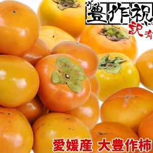 愛媛産 大豊作訳あり柿 5kg 品種おまかせ【送料無料】 フルーツ 果物 くだもの わけあり 食品 ワケあり 産地直送|fruit-sunny