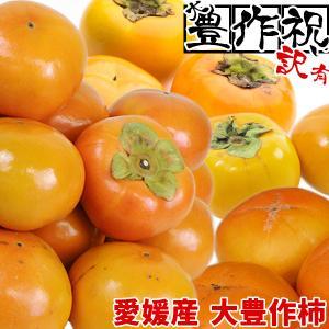 愛媛産 大豊作訳あり柿 2kg 品種おまかせ【送料無料】2品で+2kg(6kgセット) 3品で+4kg(10kgセット) フルーツ 果物 くだもの わけあり 食品 ワケあり 産地直送|fruit-sunny