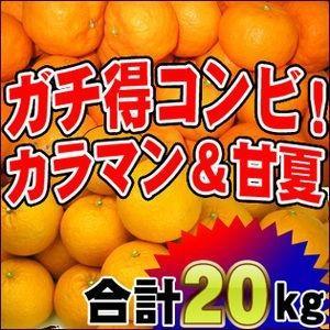 ザ・ガチ得!訳ありカラ・マンダリン10kgと訳あり甘夏10kgの20kgセット【送料無料】|fruit-sunny