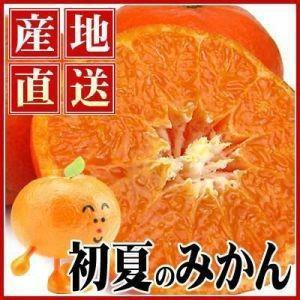 愛媛産カラ・マンダリン2kg【送料無料】【秀品】|fruit-sunny