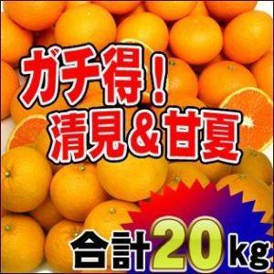 ガチ得タイムセール!清見10kgと甘夏10kg徳用【送料無料】訳あり|fruit-sunny