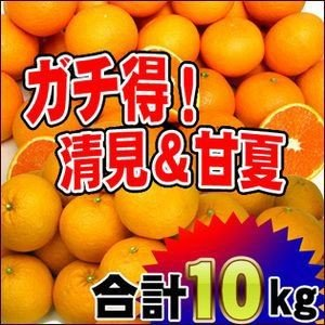 ガチ得タイムセール!清見5kgと甘夏5kg徳用【送料無料】訳あり|fruit-sunny