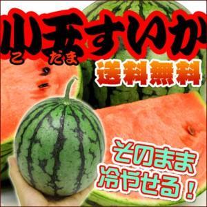 切らずに冷やせる!完熟小玉すいか4玉 【送料無料】|fruit-sunny