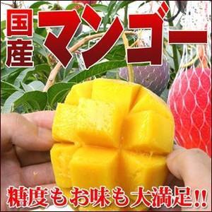 糖度抜群!国産完熟マンゴー1個|fruit-sunny