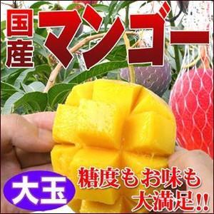 糖度抜群!国産完熟マンゴー1個(大玉)|fruit-sunny
