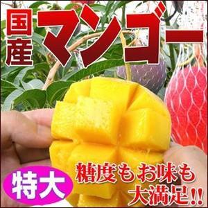 糖度抜群!国産完熟マンゴー1個(特大)|fruit-sunny