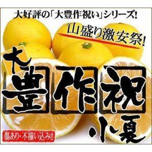 家計救済みんなの300円小夏(ニューサマーオレンジ)訳あり1kg300円で20kgまでお好きなだけどうぞ♪|fruit-sunny