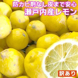 瀬戸内産 国産レモン 1kg 訳あり クール便送料無料 檸檬 防腐剤 防かび剤不使用 フルーツ 果物 くだもの 柑橘類|fruit-sunny