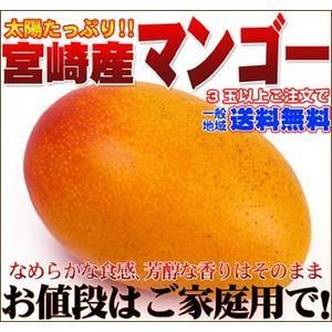 宮崎産大玉マンゴー 1個|fruit-sunny