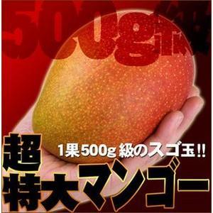 超特大!宮崎産大玉マンゴー 1個|fruit-sunny