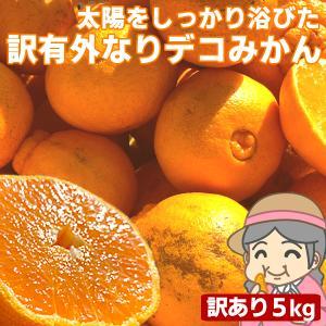 愛媛産 ご家庭用 農家さんもぐもぐ 外なり訳ありデコみかん 5kg(+約0.5kg多め) デコポン でこぽん 不揃い 傷 汚れ有 フルーツ 果物 くだもの みかん 柑橘類 fruit-sunny