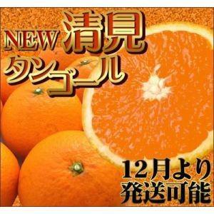 12月から食べられるNEW清見タンゴール2kg|fruit-sunny