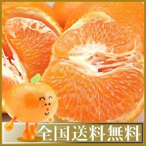 愛媛産 プレミアムはるみ5kg送料無料 fruit-sunny