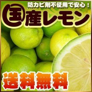 瀬戸内産 国産レモン4kg【送料無料】傷あり・不揃い|fruit-sunny