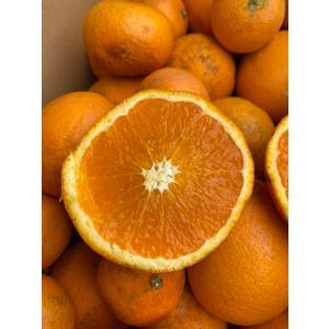 霜で傷んでしまった霜焼けきよみ(清見)1kg 訳あり・ご家庭用|fruit-sunny