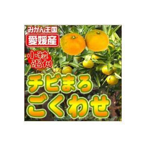 極早生チビマロみかん3kg×4箱 送料無料 訳あり フルーツ 果物 くだもの わけあり 食品 ワケあり ご家庭用 柑橘類 ミカン 産地直送 fruit-sunny