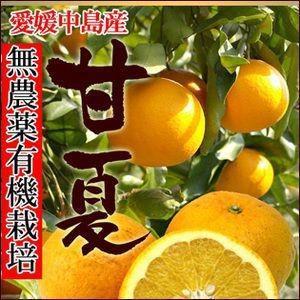 中島産 有機無農薬栽培 甘夏 2kg【送料無料】|fruit-sunny