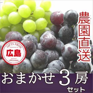 おまかせ3房 セット ぶどう ギフト 広島|fruitex