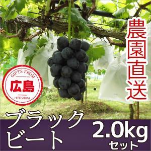 ブラックビート ぶどう 2kg ギフト 広島|fruitex