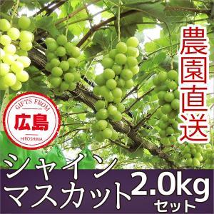 シャインマスカット ぶどう 2kg ギフト 広島|fruitex