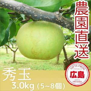 秀玉 梨 3kg(5~8個)|fruitex