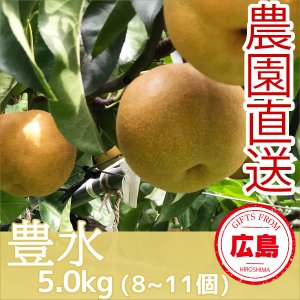 豊水 梨 5kg(8~11個)|fruitex