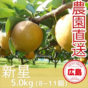 新星 梨 5kg(8~11個)|fruitex