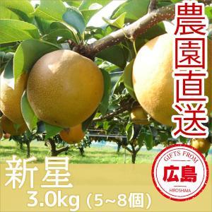 新星 梨 3kg(5~8個)|fruitex