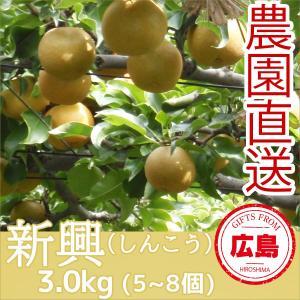 新興 梨 3kg(5~8個)|fruitex